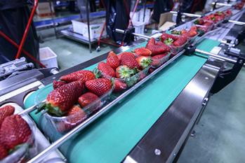 التعقيم في الصناعات الغذائية