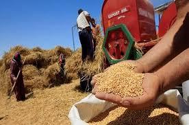 زراعه الحبوب في المغرب